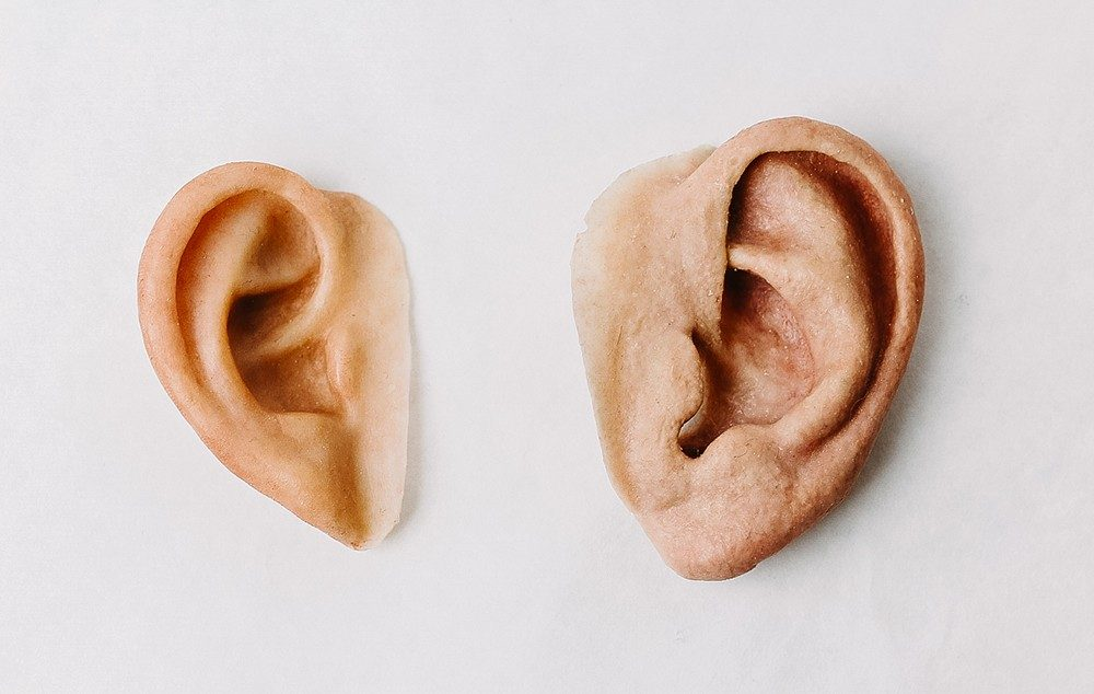 realistic silicon ears
