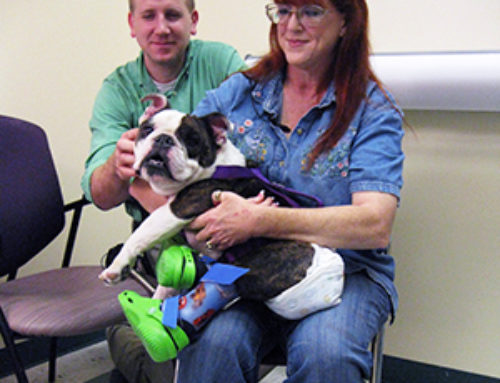 Creating Leg Braces for a Bulldog Proves Westcoast Can Do Anything
