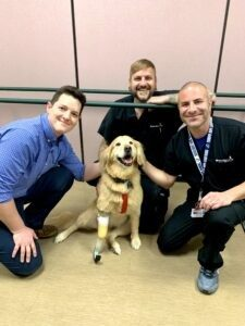 Golden Retriever with prosthetic leg, sitting, with prosthetic practitioners