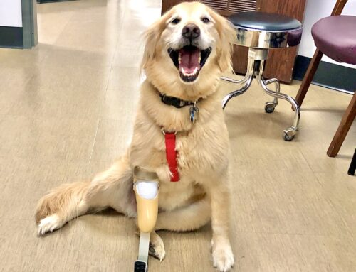 Ava, the dog, receives prosthetic leg after partial amputation